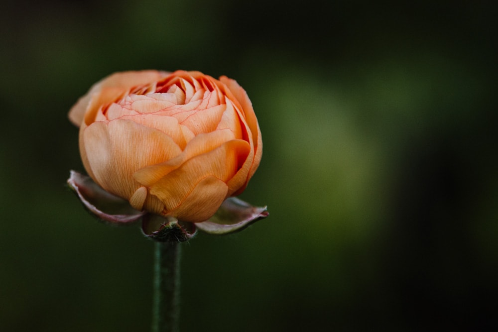 Landscape and Macro Photography, single flower with blurred out background