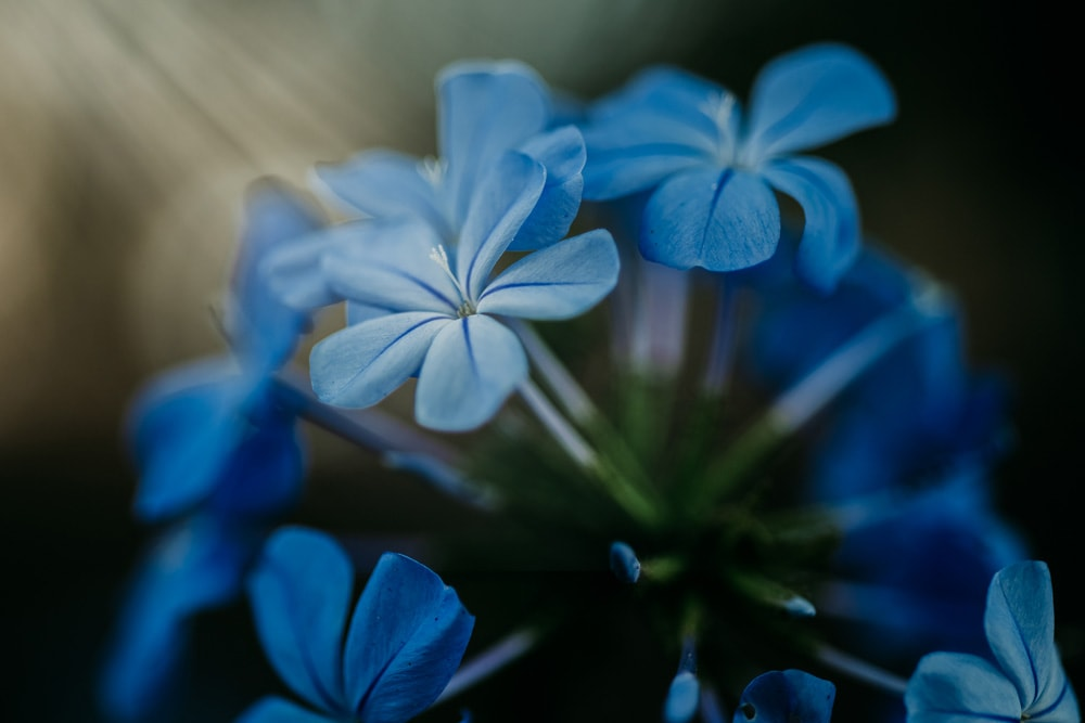 Landscape and Macro Photography, blue flowers