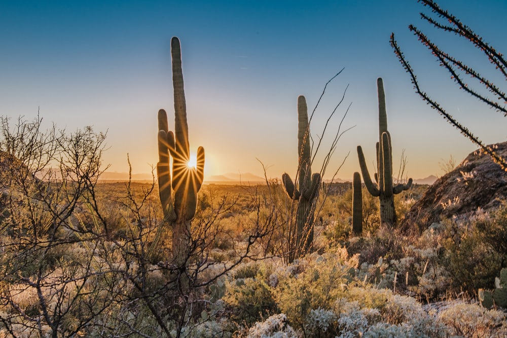 Landscape and Macro Photography, sun poking through cactus in the desert