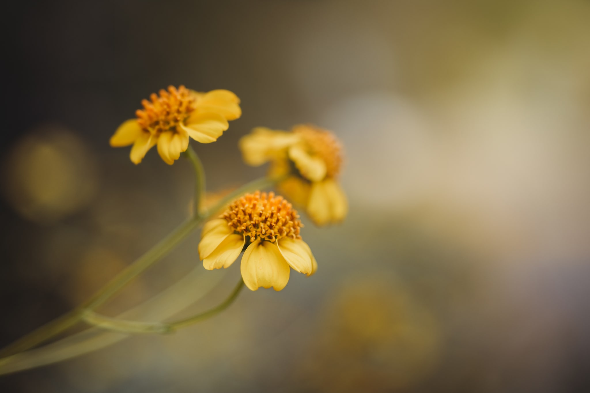 Investment Page, Kim Belverud Photography, Close up picture of a flower